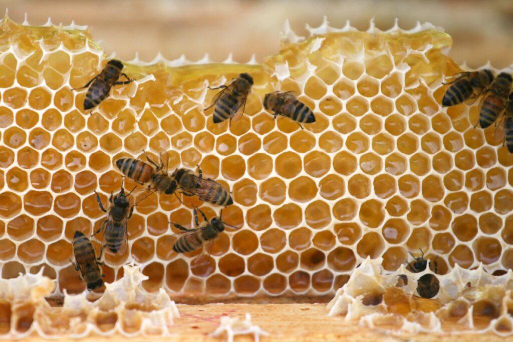 Bees on a honey comb - NPA in Manuka Honey